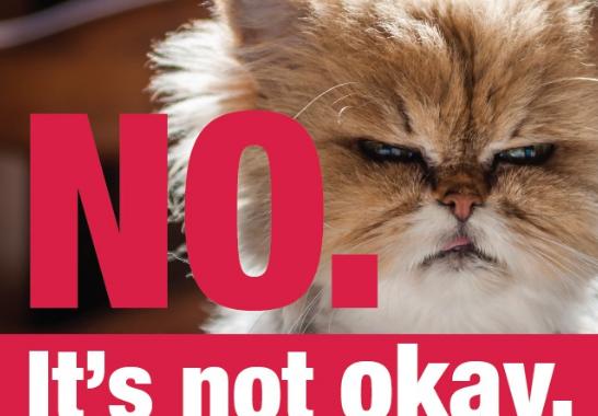 """Motiv der Kampagne """"No. It's not okay. #mischdichein bei rechter Hetze"""" zeigt Katze und den Titel der Kampagne."""